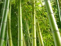 Lessons from the Bamboo Tree
